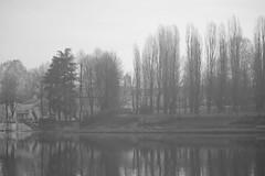 Lungo Po (D.Ph) Tags: city trees people blackandwhite bw italy nature water alberi river torino fiume bn po acqua turin biancoenero lungopo