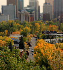 Toy Kensington (Una S) Tags: life street city canada calgary fall leaves yellow miniature alberta kensington effect