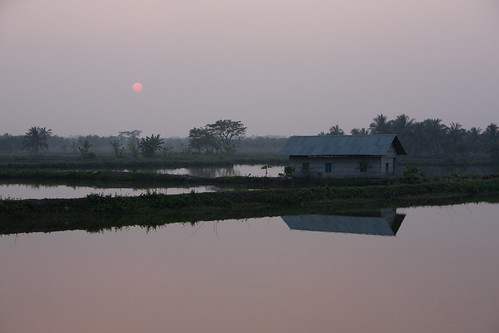 Shrimp ponds near Khulna, Bangladesh. Photo by Mike Lusmore/Duckrabbit, 2012.
