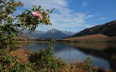 Pink Amongst the Blue (Tones Corner) Tags: lake rosehip southcanterbury nzscene lakesarah nzbeauty nzscenic