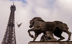 Eiffel Tower, Pigeon,Horse (PhilStrat) Tags: horse paris france tower statue cheval nikon tour pigeon eiffeltower eiffel toureiffel esplanade trocadero