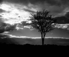 Tree (Mamiya RB67 Pro S, Fuji Acros 100) (baumbaTz) Tags: trees red blackandwhite bw cloud sun sunlight tree 120 mamiya film monochrome clouds analog mediumformat photography blackwhite fuji wolke wolken silouette filter sw medium format neopan 100 analogue monochrom grayscale february sunrays schwarzweiss sonne bäume analogphotography rb baum sonnenstrahl 67 sonnenstrahlen sunray februar greyscale redfilter acros rb67 filmphotography fpp sonnenlicht 2013 analoguephotography 201302 featuredfilm