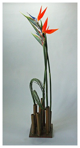 Bird of paradise and flexigrass in self made vase