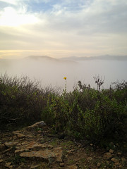 Fog fills in the valley (Night Owl City) Tags: california usa flower fog sunrise venturacounty thousandoaks conejovalley arroyoconejo lynnmeretrail lynnmere