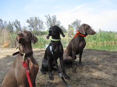"""Training Day! Riva, Blue & Ava • <a style=""""font-size:0.8em;"""" href=""""http://www.flickr.com/photos/66999112@N00/8566743337/"""" target=""""_blank"""">View on Flickr</a>"""