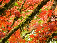 Bear Creek Park, B.C. (careth@2012) Tags: scenery chariotsofnaturelevel1