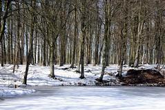 Winterwald am Teich 1 (dendroaspis2008) Tags: wood schnee trees winter tree germany deutschland madera rboles boom arbres rbol bok alemania albero holz bume allemagne arbre rvore baum trd hout germania bois schles