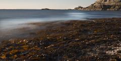 D8A_4213 (Viggo Johansen) Tags: lighthouse waves shoreline kelp tang tare rogaland blger fjly fjlyfyr viggojohansen