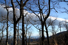 La nube del bosque. (manisanto) Tags: nwn