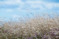 Silver (Birdiebirdbrain) Tags: naturephotography nature naturfoto straws lyng mols molsbjerge workshop hadstenhjskole 2016 32 nikon nikond3300