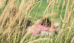 Day Dreaming. (Omygodtom) Tags: outdoors people perspective dof portrait pov selectivefocus field star friend diamond digital nikon natural d7100 nikon70300mmvrlens