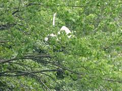 Bayard Cutting Fields Arboretum (87) (pensivelaw1) Tags: suffolkcounty newyorkstate longisland bayardcuttingarboretumstatepark