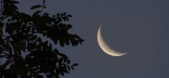 Moon (na_photographs) Tags: mondsichel himmel sky ste bltter zweige tree baum