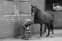 The day the farrier came (ireniclife) Tags: odc farrier tardebigge monochrome horse uk craft horseshoe work warwickshire