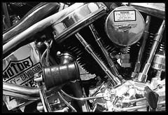 1975 Self Portrait (jimhairphoto) Tags: 1975 hellsangels harley motorcycle sandiego america streetlife streetstories thtrederue canon f1 ilford hp4 35mm film blackandwhite blancetnoir schwarzeaufweis blancoynegro blancinegre siyahrebeyaz jimhairphoto