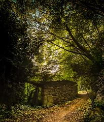 fairytale (bilusickr) Tags: fairytale krka woods forest pathway path way stone wall tree trees dalmatia croatia green