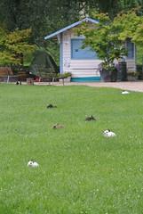 DSC_3406 (mavnjess) Tags: 15 june 2016 vicenza italy italia coniglio coniglios rabbit rabbits bunny bunnies