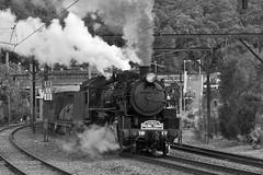 Hawkesbury River departure 3 (highplains68) Tags: aus australia nsw 5917 steam tour hawkesburyriver lvr northernsteamspectacular 2016