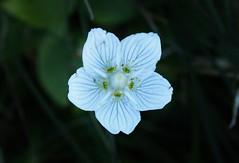 Wildblume (Hugo von Schreck) Tags: hugovonschreck outdoor flower wildflower wildblume blte blume canoneos5dsr tamron28300mmf3563divcpzda010