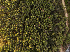 Birds Eye (barisakpinar) Tags: phantom3 dji djiphantom3 birdseyeview road roads tree trees nature drone uav rumelifeneriky istanbul turkey tr