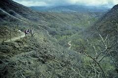 Inside Diamond Head: Long Trail (AntyDiluvian) Tags: hawaii 2001 30thanniversary oahu honolulu diamondhead cone volcaniccone trail summittrail diamondheadstatemonument