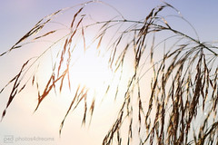 cold but sunny (photos4dreams) Tags: fridaymorning23092016p4d nature natur pflanzen plants gras herbst autumn licht light photos4dreams p4d photos4dreamz spaziergang walk