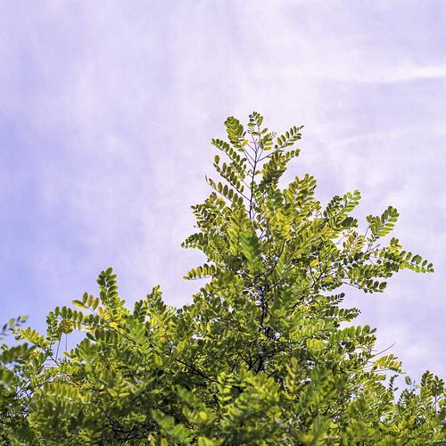 Summer branches - part 9