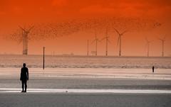 Another Place (perseverando) Tags: installation anotherplace beach sea liverpool crosby iron men windmills birds perseverando antonygormley