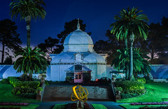 unaffected by his central post (pbo31) Tags: sanfrancisco california evening bayarea nikon d810 color september 2016 summer boury pbo31 goldengatepark black night dark green palm conservatoryofflowers over tree art sculpture