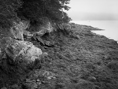 rocky outcropping, fog, Fort Point, Saint George, Maine, Mamiya 645 Pro, mamiya sekkor 80mm f-2.8, Rollei RPX 400, Ilford Ilfosol 3 Developer, early September 2016 (steve aimone) Tags: rocky outcropping shoreline tidalriver fog fortpoint saintgeorge maine monochrome monochromatic midcoast mamiya645pro mamiyasekkor45mmf28 rolleirxp400 ilfordilfosol3developer bl landscape