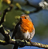 Robin (Cornishcarolin. Thank you for over 2 Million Views) Tags: nature birds cornwall stones robins foof magiceye featherweights riveroflight citysquares fantasticnature afotando avantgardeart catandmoose envyofflickr dreamplaces momentsofdreams primusinterpares atouchofmagic photosansfrontieres baugroupimages alittlebeauty lapetitegalerie digitalmasterpiece visionqualitygroup swiftwings fairiesandwizardseyes coth5 naturesprime dreamsilldream marculescueugendreamsoflightportal hganimalsonly livinginharmonywithnature keepyoureyesopenayezloeilnopeople colorsoftheheartinvitedimagesonly amoreperlanatura ilclubdiwallace coloremiomondo comelovediamo listentothesecretmelodyoflife lamissonata covertpaintersphotoshopartists arborsquare~anaturegroup~ elaretdelasluzydelasombra faunaandflora♠contestflowersbutterflies eblouissantenaturebrilliantnaturep1c2nopeople