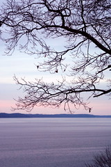 Kentucky Lake (jclegill) Tags: trees winter kentuckylake 365project