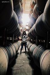 Zaca Mesa's Barrels (LeCachacs) Tags: california santa love glass vineyard bottle wine farm winery barbara cheers grape flickraward
