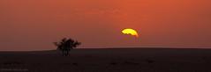 (© ibrahim) Tags: sunset sky panorama sun nature clouds landscape photography eos desert drought شمس ibrahim غروب ابراهيم غيوم المطر صحراء 50d الشمس طبيعه الغيوم كانون canon50d الابل شعيب لاندسكيب طلح الطلح