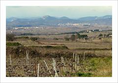 Routes d'Hérault - 3 (série) (Véronique Delaux On/Off) Tags: winter landscape hiver montpellier vineyards paysage vignes photographe hérault cévennes 2013 véroniquedelaux »véroniquedelaux» delaux «photographemontpellier»
