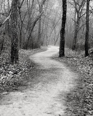 Path to nowhere (Just a Mom With a Camera) Tags: blackandwhite plants mist tree nature vertical fog mystery fairytale forest dark outdoors woods scenic growth footpath tranquilscene landscaped wildernessarea coniferoustree thenaturalworld coniferousforest treearea