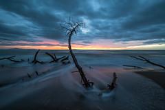 Maremma 69 Canon Eos 6D (Tommaso Renieri) Tags: sea sky italy parco beach clouds seaside italia nuvole mare pines cielo foam tuscany toscana della spiaggia maremma pini schiuma