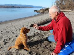 Reni at the Beach (mariewise) Tags: dog beach oregon puppy golden washington sand retriever columbiariver kalama marinepark portofkalama ahlepoint