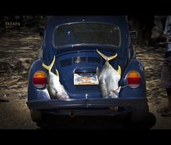 Smoking  fish (beluga 7) Tags: fish canon mexico mexique poisson ixtapa canon7d