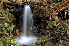 Whittermore Gulch II (FeralWhippet) Tags: california longexposure creek waterfall nikon bayarea sanmateocounty naturescene purisimacreekredwoodsopenspacepreserve d7000 nikonafnikkor20mmf28d whittermoregulch