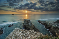 Muriwai Gannet Colony (Nick Twyford) Tags: sunset sea newzealand seascape clouds island nikon rocks waves wideangle cliffs auckland northisland westcoast seabird gannet rockstack muriwai colourimage leefilters 1024mm d7000 lee06gndhard lee06gndsoft