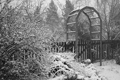 A Sudden Snowfall (Miss Marisa Renee) Tags: trees winter blackandwhite snow monochrome weather digital canon fence march wooden colorado arch snowy branches atmosphere evergreens archway limbs snowfall bushes spruce greyscale sudden surprises