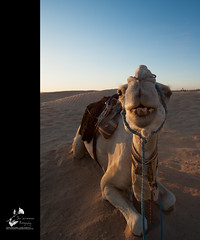 Yo! What's Up??!? (geirkristiansen.net.) Tags: sahara closeup ride tunisia wide riding camel douz kebili dromedarian sigma1224mmf4556