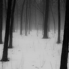 Winter Forest In Fog 003 (noahbw) Tags: trees winter bw mist snow monochrome misty fog forest square landscape blackwhite woods nikon foggy explored hellernaturecenter d5000 noahbw