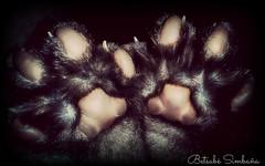 Patitas (Betsab Simbaa Jaya) Tags: gatos gato patas gatito patitas