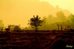 Good morning friends ! (Rambonp love's all creatures of Universe.) Tags: trees red wallpaper sky india lake mountains green water leaves yellow fog clouds farmhouse canon landscape paradise village lagoon hills crop agriculture cultivation chandigarh shimmer haryana panchkula mornihills tikaltaal
