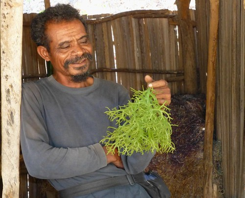A seaweed farmer shows his freshly harvested seaweed in Liquica, Timor-Leste. Photo by Jharendu Pant, 2012.