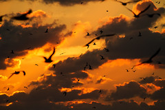 Sunset with bokeh birds, Key West, Florida (Mr Bennett Kent (FINALLY Back online!!!)) Tags: sunset blur bird silhouette canon florida bokeh wildlife explore 7d birdsinflight keywest floridakeys conch mallory mallorysquare conchrepublic 100400 explored canon100400mm canon7d mrbennettkent