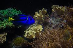 IMG_0001 (Samihan Patel) Tags: blue moon flower zoo monkey jellyfish seahorse turtle snake houston flamingos frog crocodile elephants sealion dory htx