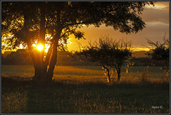 Wool Like Money Don't Grow On Trees.. (Picture post.) Tags: landscape nature green sunrise wool sheep fields paysage arbre summertime interestingness clouds sunburst shadows
